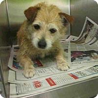 Adopt A Pet :: Winn-Dixie - Encino, CA