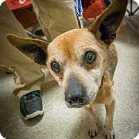 Adopt A Pet :: Hero - Loudonville, NY