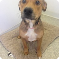 Adopt A Pet :: TESS - Pompton lakes, NJ
