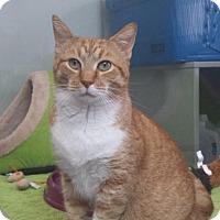 Adopt A Pet :: Morris - Fort Lauderdale, FL