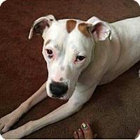 Adopt A Pet :: Chloe - Hanover, PA