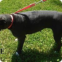 Adopt A Pet :: Jane - Batesville, AR