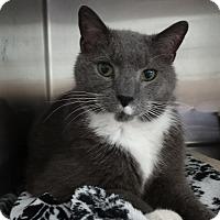 Adopt A Pet :: Troy - Elyria, OH