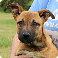 Adopt A Pet :: Baja - Glastonbury, CT