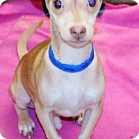 Adopt A Pet :: Oliver - San Jacinto, CA