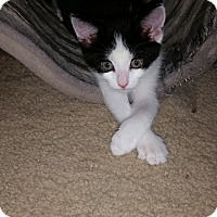 Adopt A Pet :: Peppers - Turnersville, NJ
