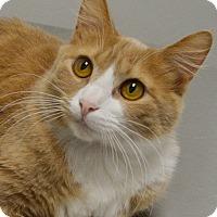 Adopt A Pet :: Monarch - Springfield, IL