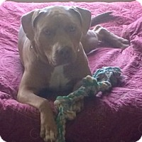 Adopt A Pet :: Big Man~Courtesy Post~ - Columbus, OH