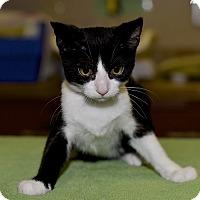 Adopt A Pet :: Jericho - Medina, OH