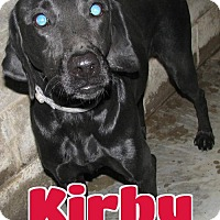 Adopt A Pet :: #245 Kirby - Lawrenceburg, KY