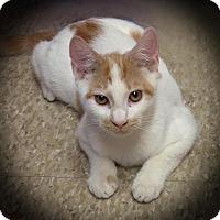 Adopt A Pet :: Hilton - Earl, NC