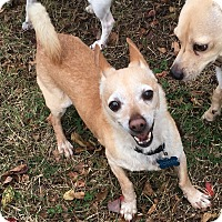 Adopt A Pet :: Saul - Va Beach, VA