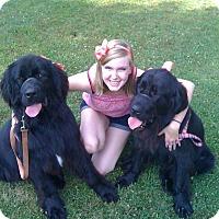 Adopt A Pet :: Freya - Waxhaw, NC