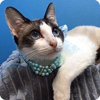 Adopt A Pet :: Lenore - Pasadena, TX