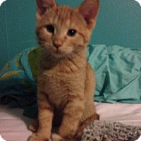Adopt A Pet :: McCready - Des Moines, IA