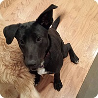 Adopt A Pet :: A - BETTY - Vancouver, BC