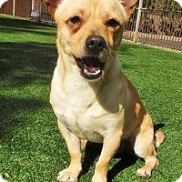 Adopt A Pet :: Rey - Dublin, CA