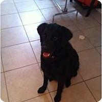 Adopt A Pet :: Timber - Denver, CO
