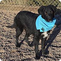 Adopt A Pet :: Louie - Aurora, CO