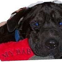 Adopt A Pet :: Beau - Adoption Pending!! - Antioch, IL