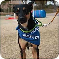 Adopt A Pet :: Lyric - Phoenix, AZ