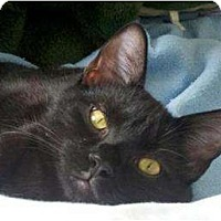 Adopt A Pet :: Licorice - Arlington, VA