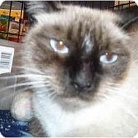 Adopt A Pet :: Mei Ling - Riverside, RI