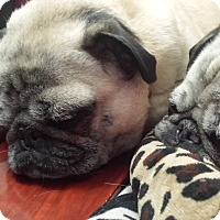 Adopt A Pet :: Coco - Avondale, PA