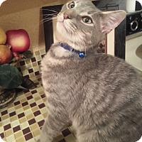 Adopt A Pet :: Loki - Harrisburg, NC