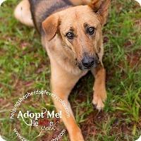Adopt A Pet :: Barbara Jean - Montgomery, AL