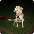 Adopt A Pet :: Mona (Has application)