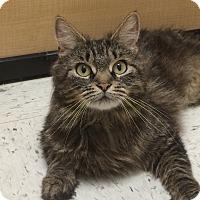 Adopt A Pet :: Stormy - Richmond, VA