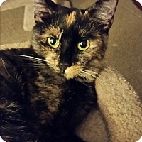 Adopt A Pet :: Alexandra - Middletown, CT