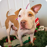 Adopt A Pet :: Riley $125 - Seneca, SC