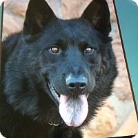 Adopt A Pet :: BEAU VON BENEDIKT - Los Angeles, CA