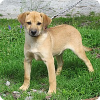 Adopt A Pet :: LINDEE - Hartford, CT