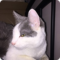 Adopt A Pet :: Leo - East Brunswick, NJ