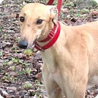 Adopt A Pet :: WW Mcgroup - Gerrardstown, WV