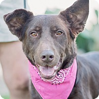 Adopt A Pet :: Fabulous Frankie aka Francesca - Houston, TX