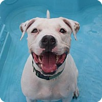 Adopt A Pet :: PENDING ADOPTION - Bronx - Prospect, CT