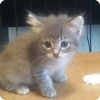 Adopt A Pet :: Storm - Savannah, GA