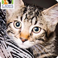 Adopt A Pet :: Kellen - Salt Lake City, UT
