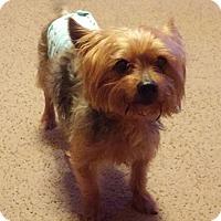 Adopt A Pet :: Marlie - Fairfield, OH