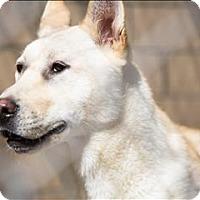 Adopt A Pet :: Donovan - Madison, NJ