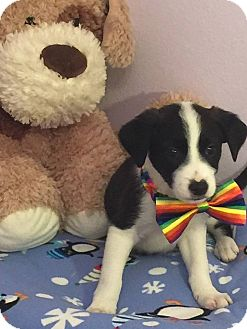 Terrier (Unknown Type, Small) Mix Puppy for adoption in Fort Atkinson, Wisconsin - Skittles