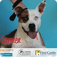 Adopt A Pet :: Carmen - Covington, LA