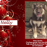 Adopt A Pet :: Nelly - Ringwood, NJ