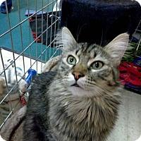 Adopt A Pet :: Kodiak - Palo Cedro, CA
