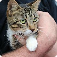 Adopt A Pet :: Cora - Ocean Springs, MS