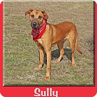 Adopt A Pet :: Sully - Hillsboro, TX